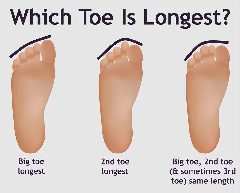 Which toe is longest