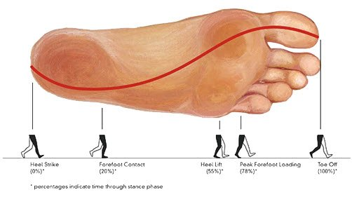 The tranfer of pressure during gait from lateral to medial